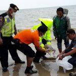 Mayat Bayi Bertali Pusar Ditemukan Di Pinggir Pantai Laut Tuban
