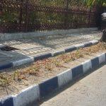 Tidak Ada Penyiraman Air, Tanaman di Sepanjang Jalan WR Supratman Sekarat