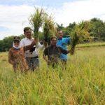 Bupati Dorong Petani Lakukan Budi daya Benih Padi Sendiri