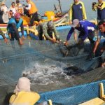 Bupati Tuban Panen Ikan Kerapu Keramba