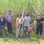 Perhutani Bersama PTPN XI Lakukan Panen Kerjasama Agroforestry Tebu